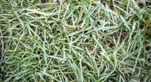 Winter Irrigation and Lawn Care