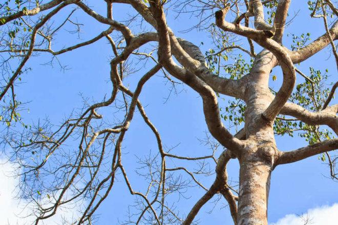 Is My Tree Dead?