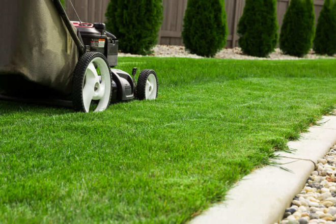 Mowing for Your Lawn Type