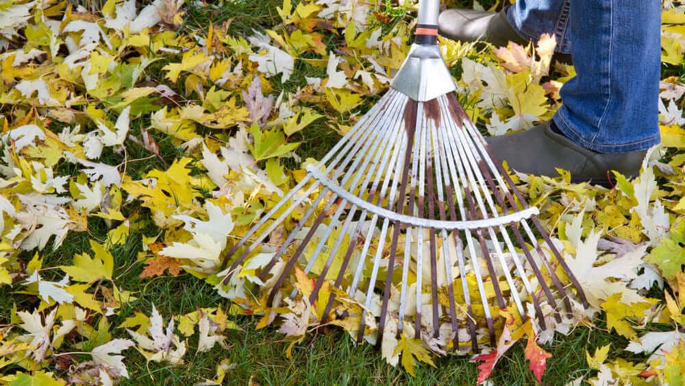 Fall Lawn Care Raking Leaves